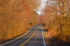 Early signs of spring on Leeds Manor Rd, Fauquier County
